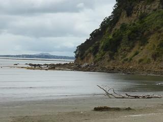 Wenderholm Regional Park, NZ
