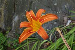 everyone needs a flower, sometimes