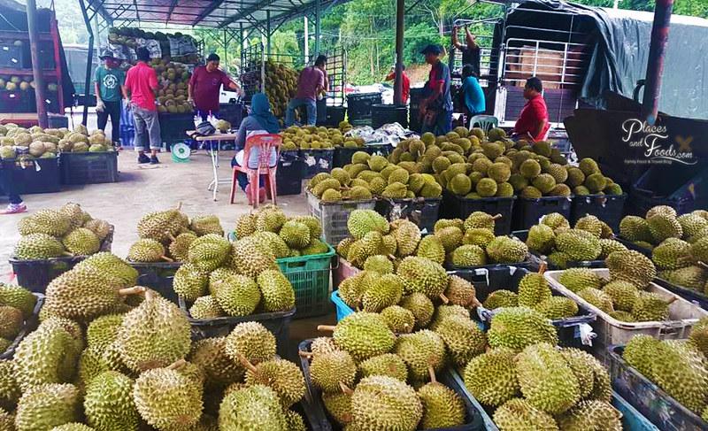 durian season 2018