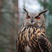 EagleOwl_P4040536