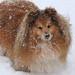 Beano in the Snow
