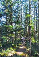 Atop Big Tree Ridge