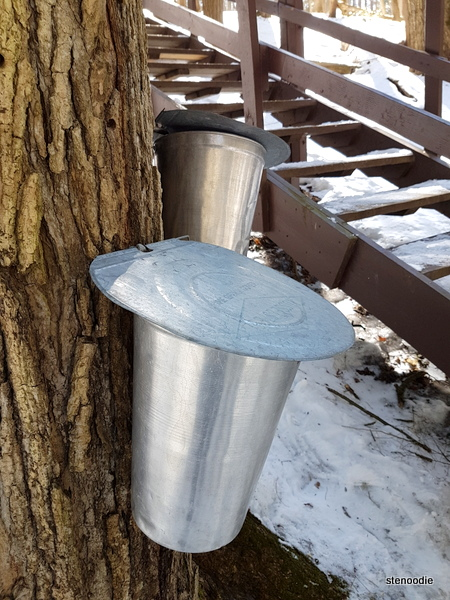 sap from a tree