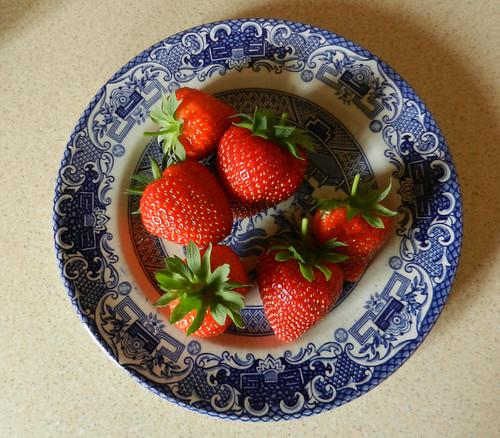 DSCN7384Early Strawberries Vibrant