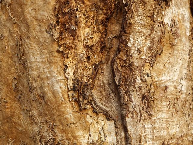 La cicatrice - The scar