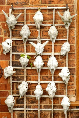 Worcestershire - Cookley - skulls display