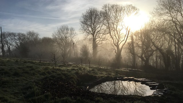 Misty view on a sunny morning across pond, young orchard to establised trees