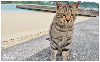 貓島(奧武島)中本鮮魚天婦羅-38