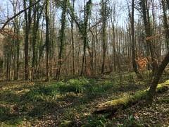 Fleury-la-Forêt08