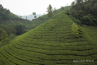 Munnar - Tea Plantations