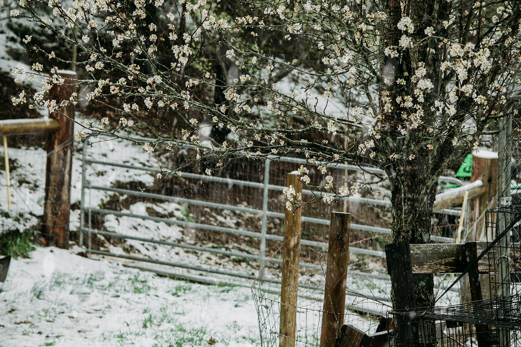 snowsnow03242018-0862032418