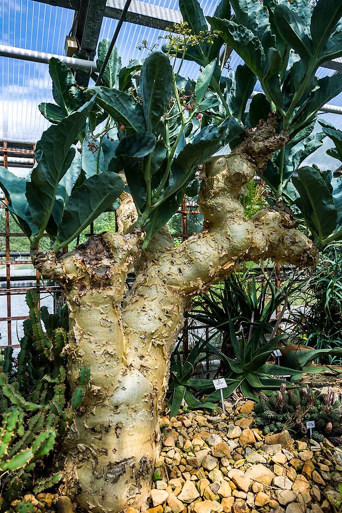 Дрезденский ботанический сад растений, много, Ботанический, дерево, разновидностей, Очень, Лианы, видеть, Кажется, кустами, растениями, экзотическими, теплицы, Огромные, рыбками, тропическими, кактусов, бродят, Маленький, мухами