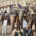 Elephant Drivers, Amer Fort, Rajasthan by Chicago_Tim