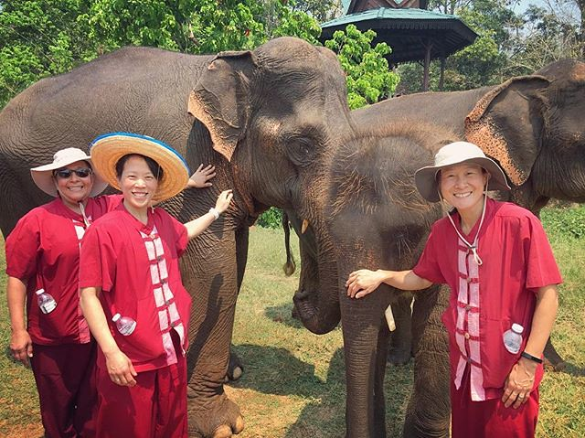 Up close and personal with these giants #elephantsanctuary #thailand #chiangmai