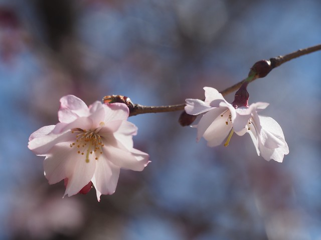 Sat, 2018-03-31 11:22 - New York Botanical Garden