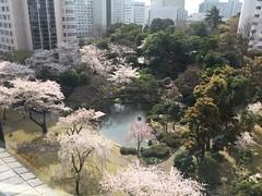 Garden at the hotel in Tokyo