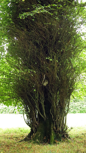 Super green trees in Killarney National Park, Ireland