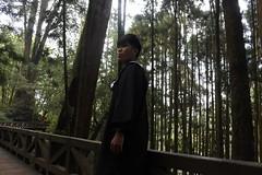 迷失森林 mist forest