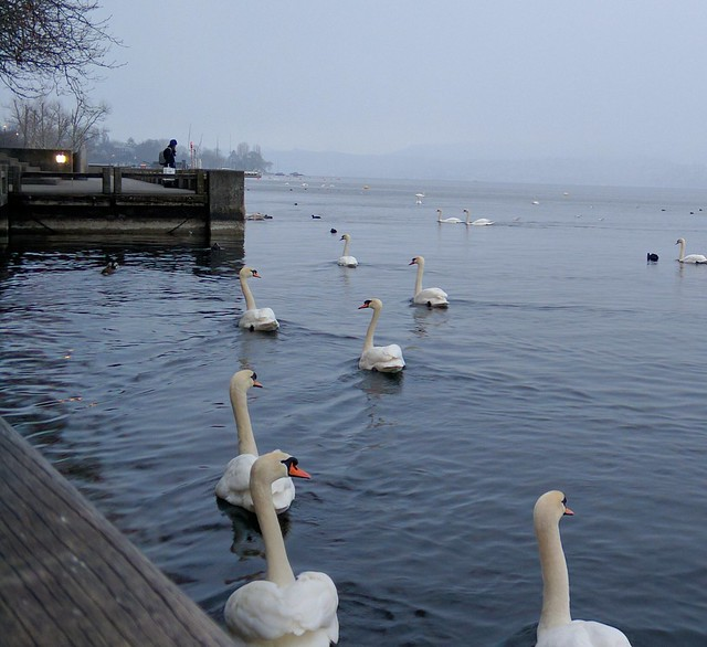 It started to snow when i took this photo in #zurich.