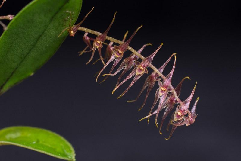 Orchideen-Neuzugang 2 40950938272_e50b57461c_c