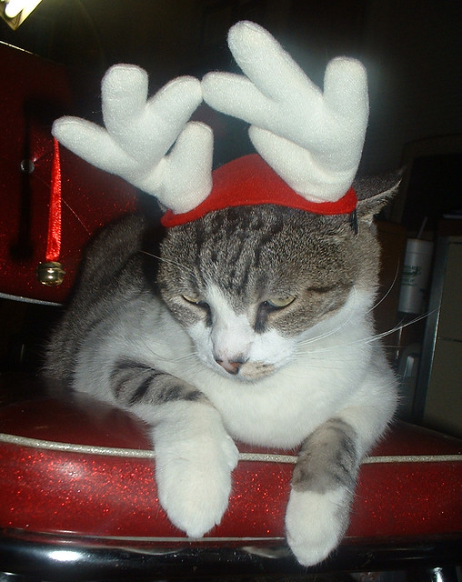 Seamus the Pissed-Off Reindeer