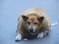 'Obese canine from New Orleans' by Mr TGT