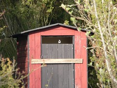building, garden buildings, hut, shack, outhouse, shed,