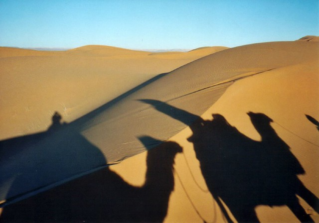 Camel Safari in the Sahara by flickr user mtsrs