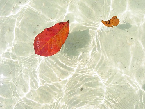 Leaves in the sea, idle like me