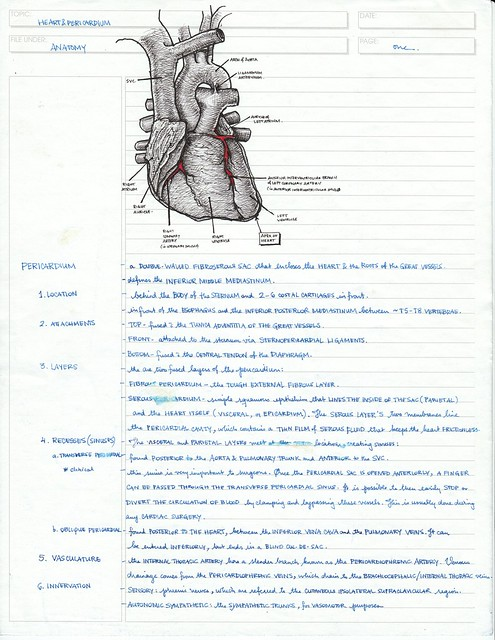 anatomy notes Quizlet provides notes chapter 1 anatomy physiology activities, flashcards and games start learning today for free.