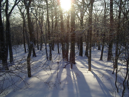 trees winter sun snow freeassociation landscape woods natural nuanc purgesurvivor purgewk57