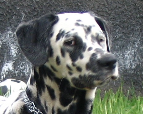 perplexed dog # zoom | Flickr - Photo Sharing!