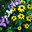 the Wildflowers group icon