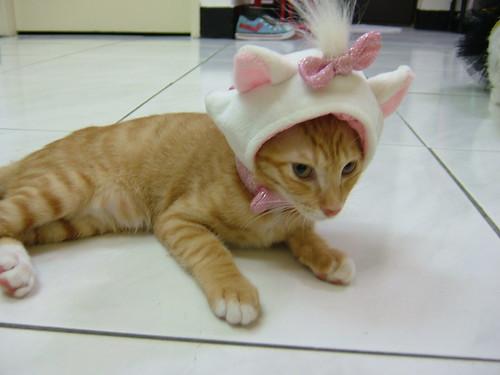 猫衣服 - flickr 上的相片集
