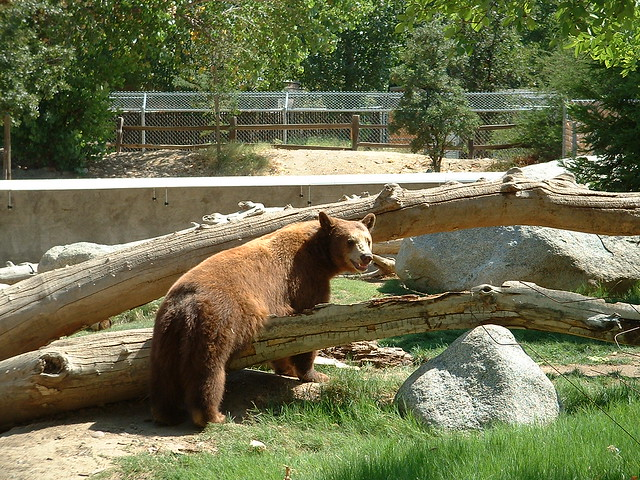 Brown bear belly itch flickr photo sharing Craigslist bakersfield ca farm and garden