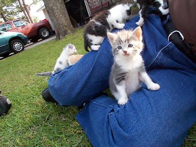 Kittens snuggle with elderly man (6 pics)width=