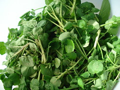 annual plant, vegetable, leaf vegetable, produce, food, garden cress, watercress,