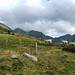 Andorran cows and mountains ©Andy Hay