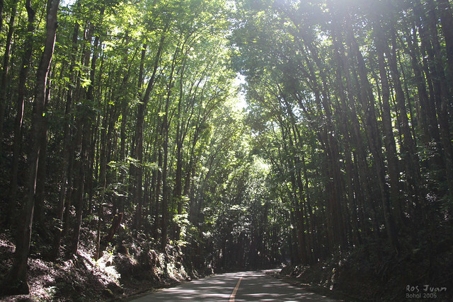 Bilar Philippines  City pictures : tree lined Bilar, Bohol, Philippines | Flickr Photo Sharing!