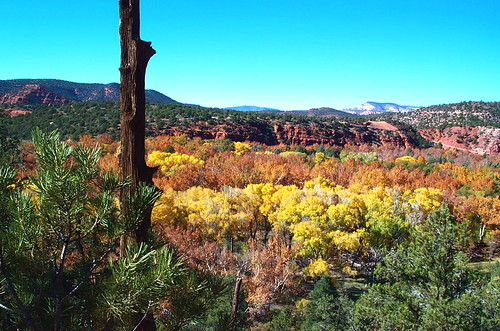 High desert autumn