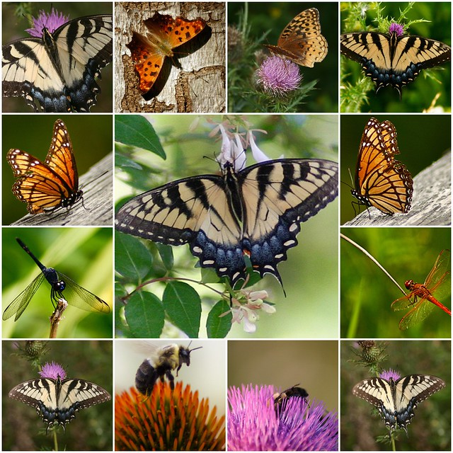 Butterflies and other winged insects