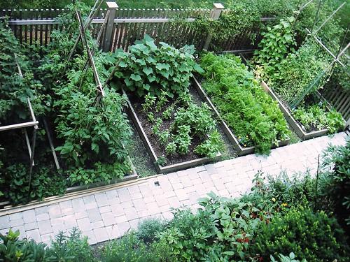 Skippy 39 s vegetable garden for Garden design blogs