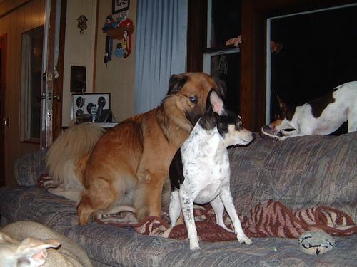 2006-09-19 - DogTimesFive-0090