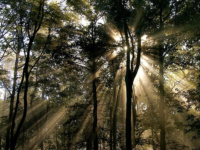 Sunbeams in the Forest for Imapix  (R.I.P.)