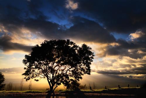 sunset tree landscape hawaii maui adventure kula upcountry kulahighway
