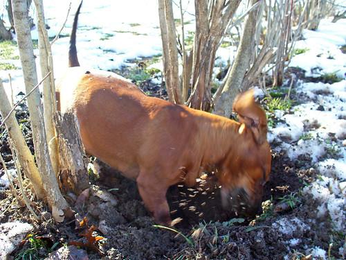 2006-12-06 - MuddyRalphie-0003