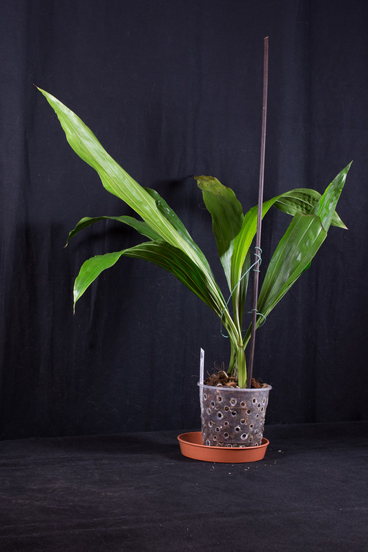 Orchideen-Neuzugang 2 26121655607_f2155c8829_c