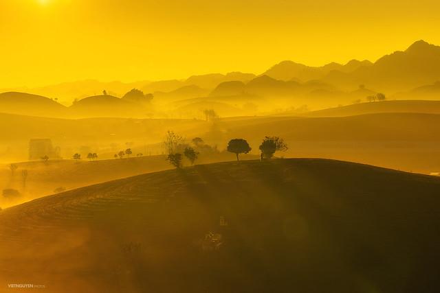 Moc Chau tea hill in early morning
