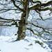 Winter's Tale II by J C Mills Photography
