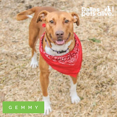 Meet Gemmy! [She's available for adoption!]
